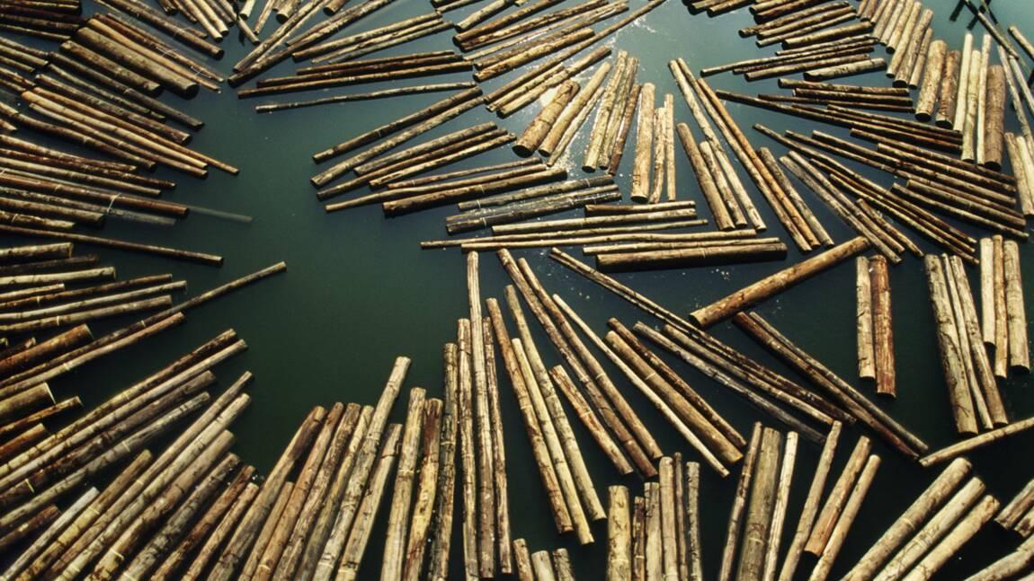 La surexploitation des ressources naturelles s'accélère
