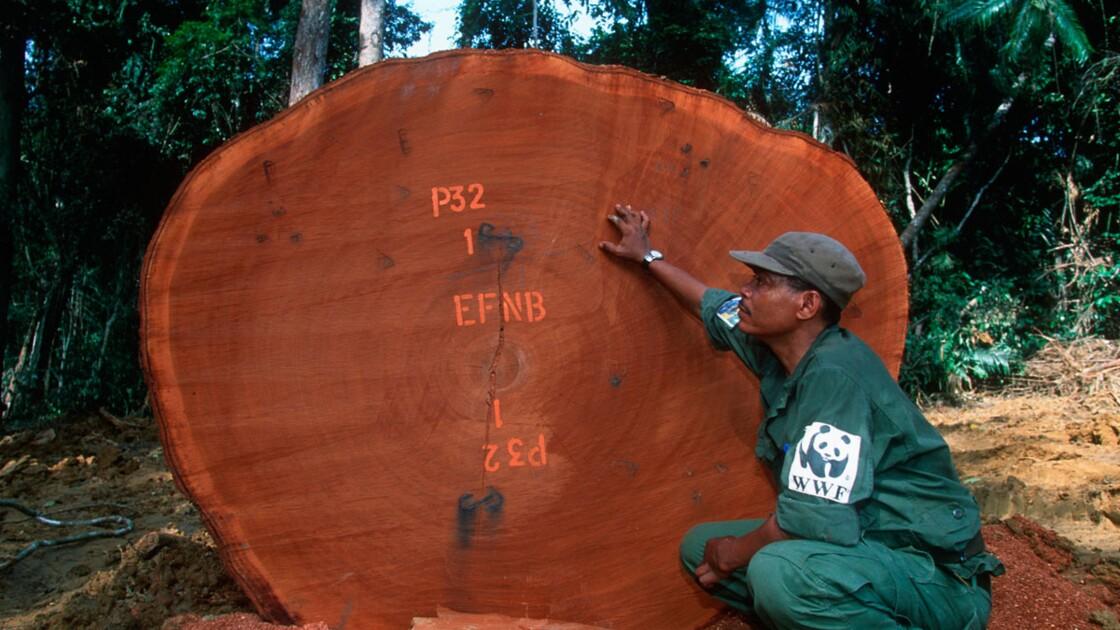 Gabon : la dette convertie pour protéger la forêt