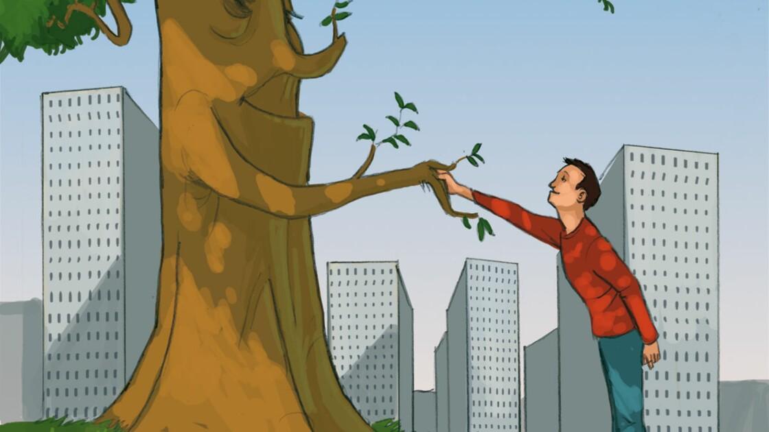 Parrainez un arbre