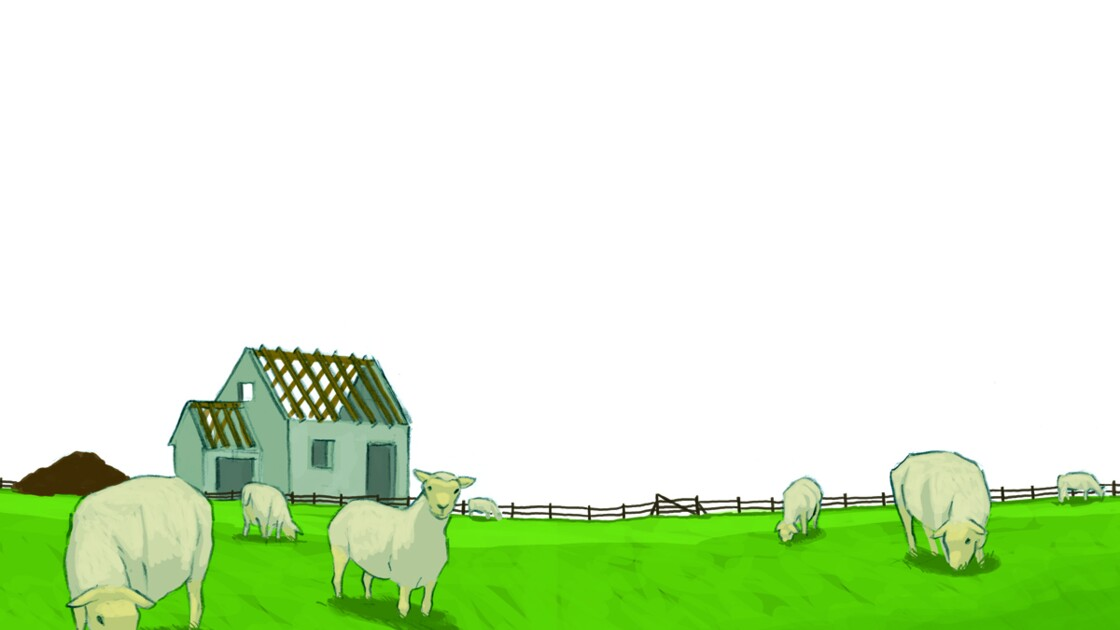 Choix des matériaux d'isolation : la laine de mouton