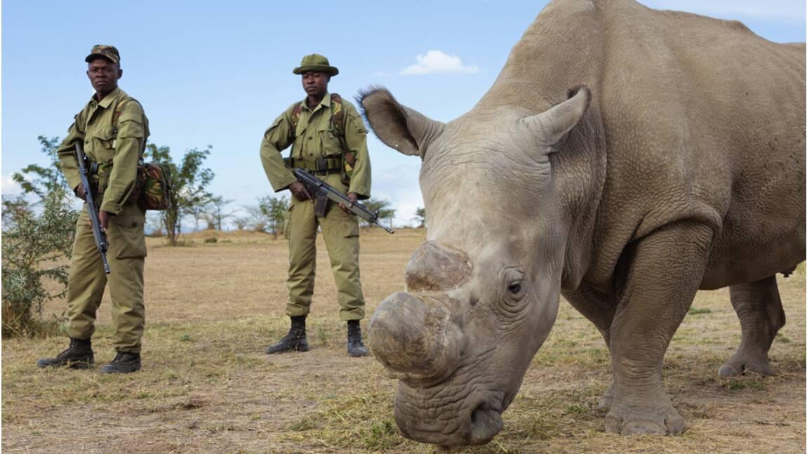 Braconnage, trafic... La faune sauvage en danger