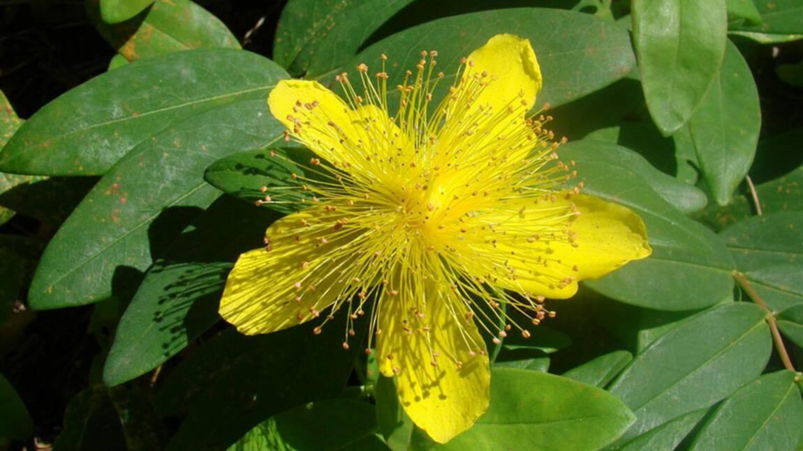 Provence. Trois plantes anciennes toujours miraculeuses (3/3)