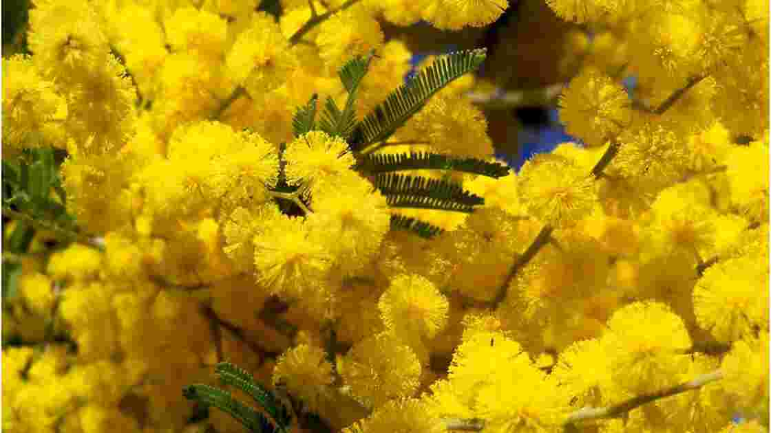 Provence. Trois plantes anciennes toujours miraculeuses (1/3)