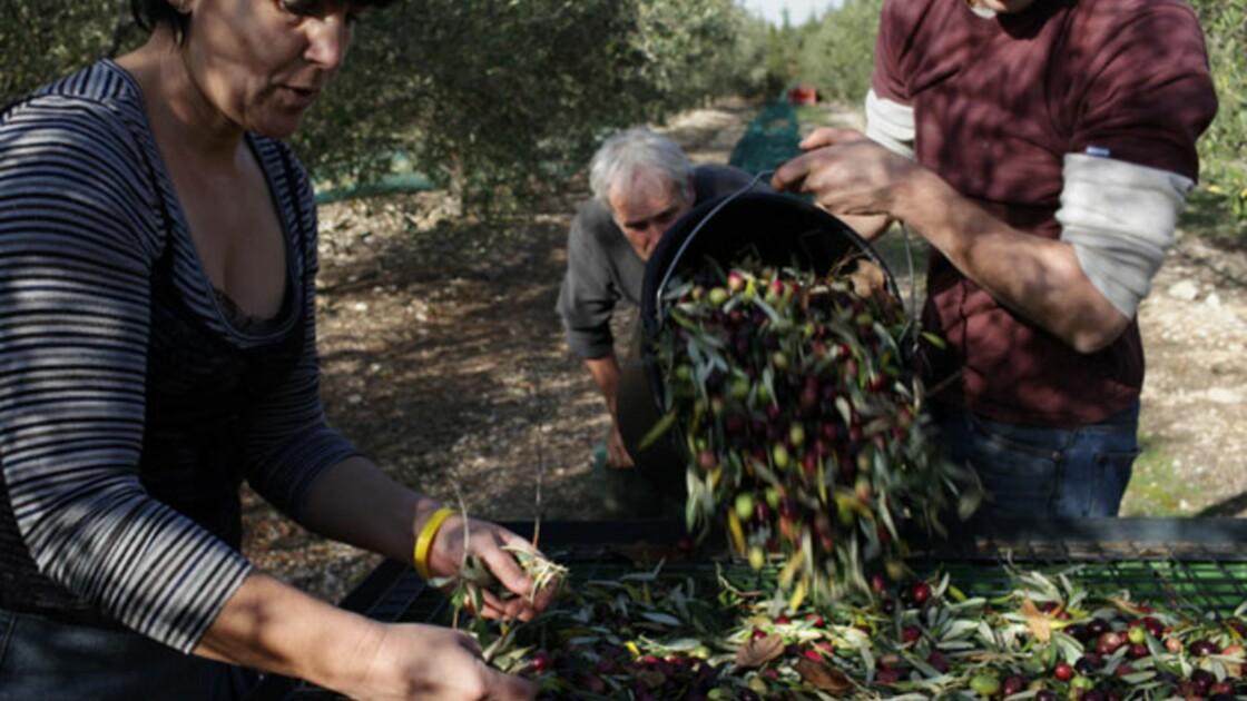 Provence : les précurseurs du bio font partie du paysage (5/6)
