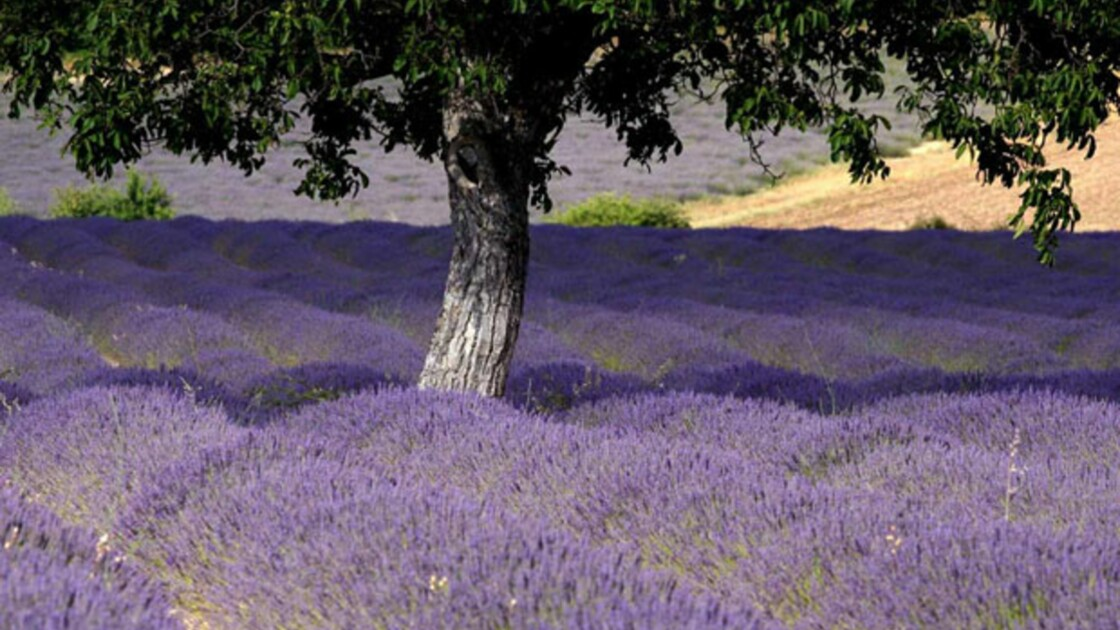 Provence : les précurseurs du bio font partie du paysage (1/6)