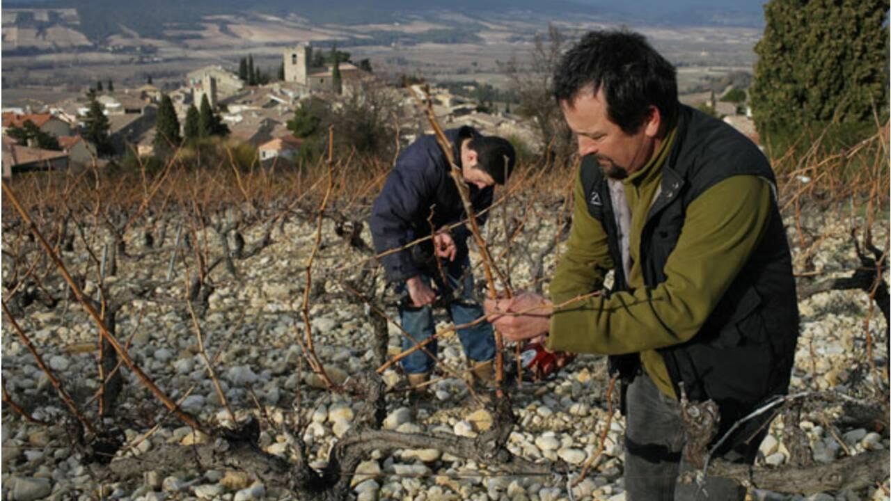 Provence : les précurseurs du bio font partie du paysage (2/6)