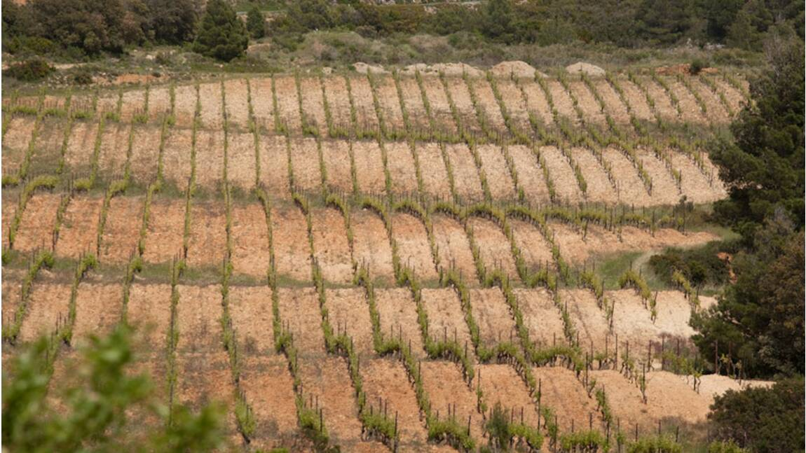 Languedoc-Roussillon : « Une région mal aimée que, désormais, on désire » (2/2)