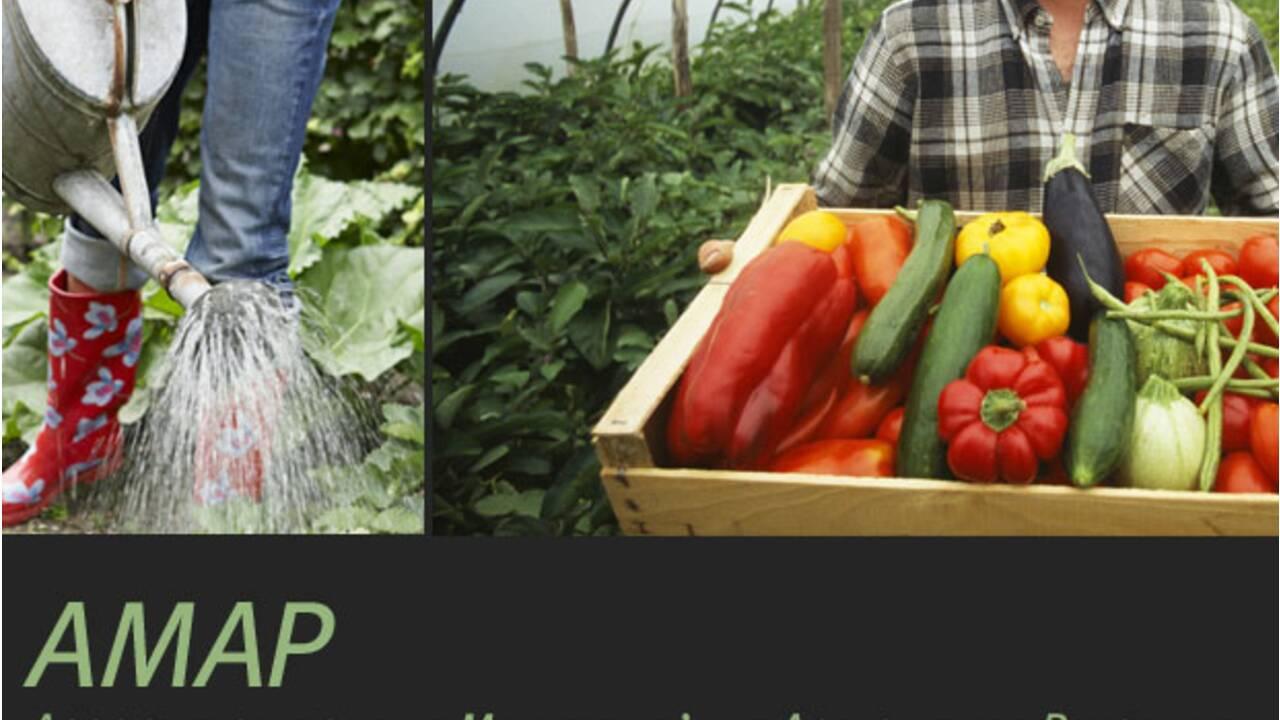 AMAP : Association pour le Maintien de l'Agriculture Paysanne