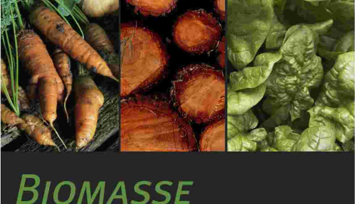 La biomasse, qu'est-ce que c'est ?