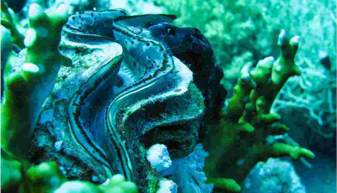 Acidification des océans : la biodiversité marine menacée par les émissions de CO2