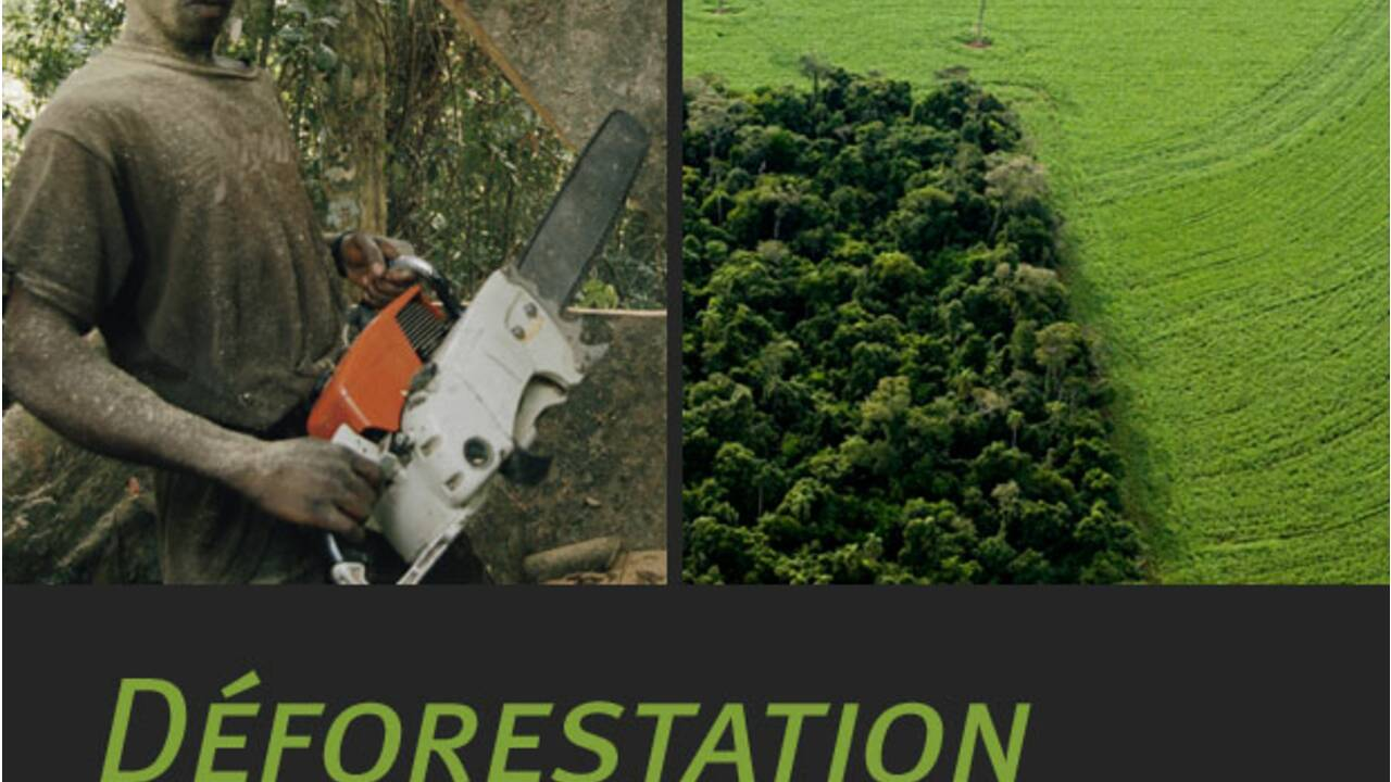 La déforestation, qu'est-ce que c'est ?