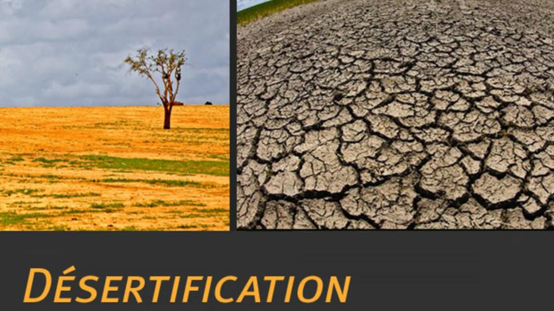 La désertification : qu'est-ce que c'est ?