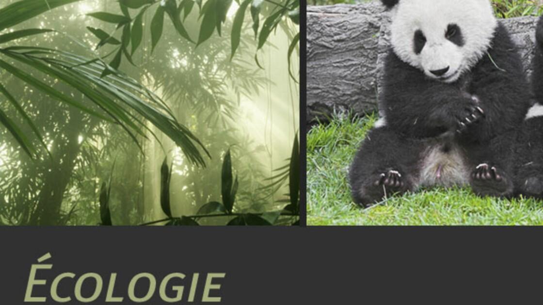 L'écologie, qu'est-ce que c'est ?