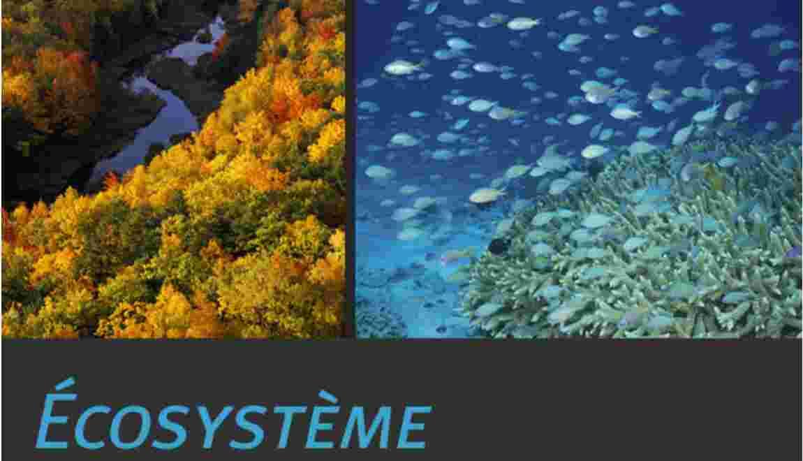 Un écosystème : qu'est-ce que c'est ?