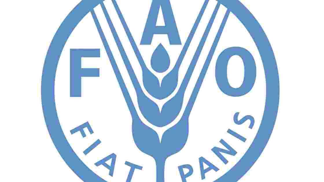 La FAO, qu'est-ce que c'est ?
