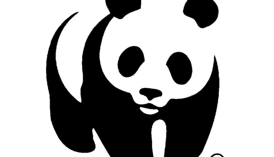 Le WWF, qu'est-ce que c'est ?