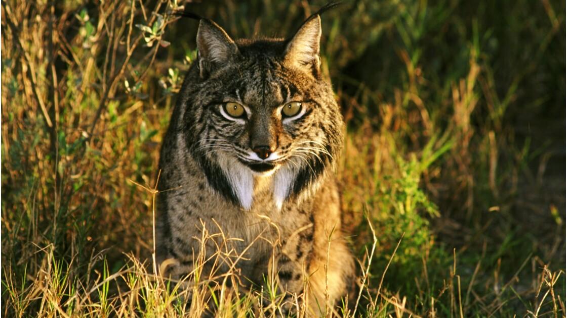 Biodiversité : vers une extinction de masse sans précédent ?