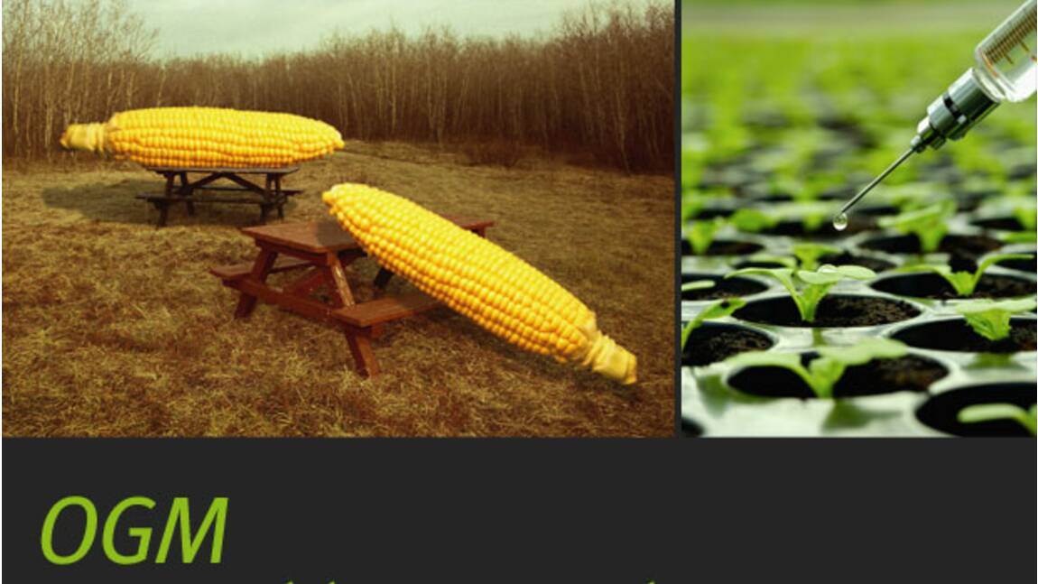 OGM : Organisme Génétiquement Modifié