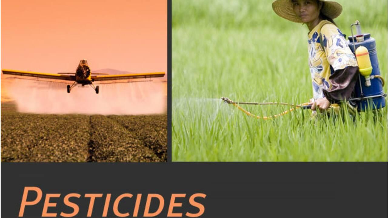 Les Pesticides : qu'est-ce que c'est ?