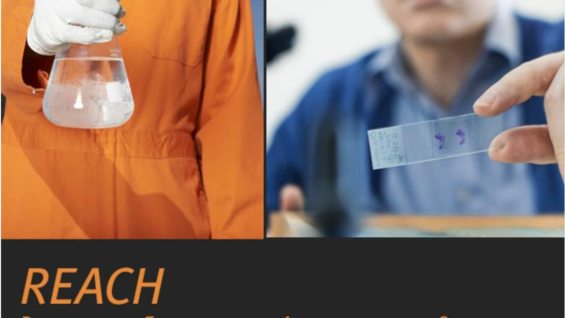 REACH, le règlement sur les produits chimiques
