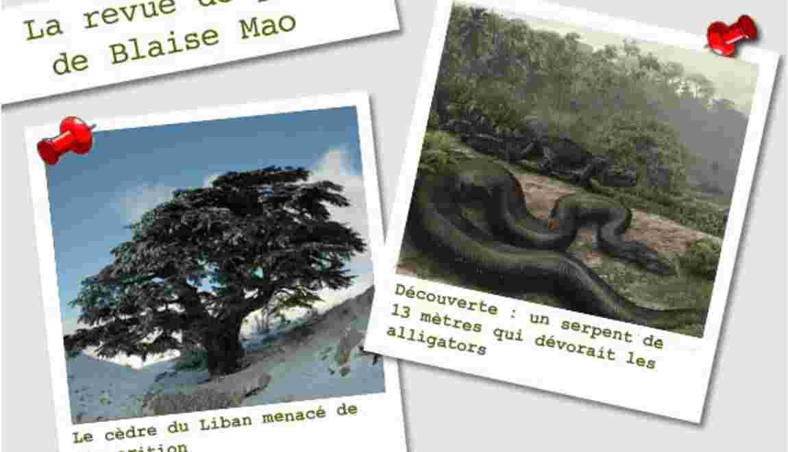La revue de presse de Blaise Mao du 30 janvier au 6 février