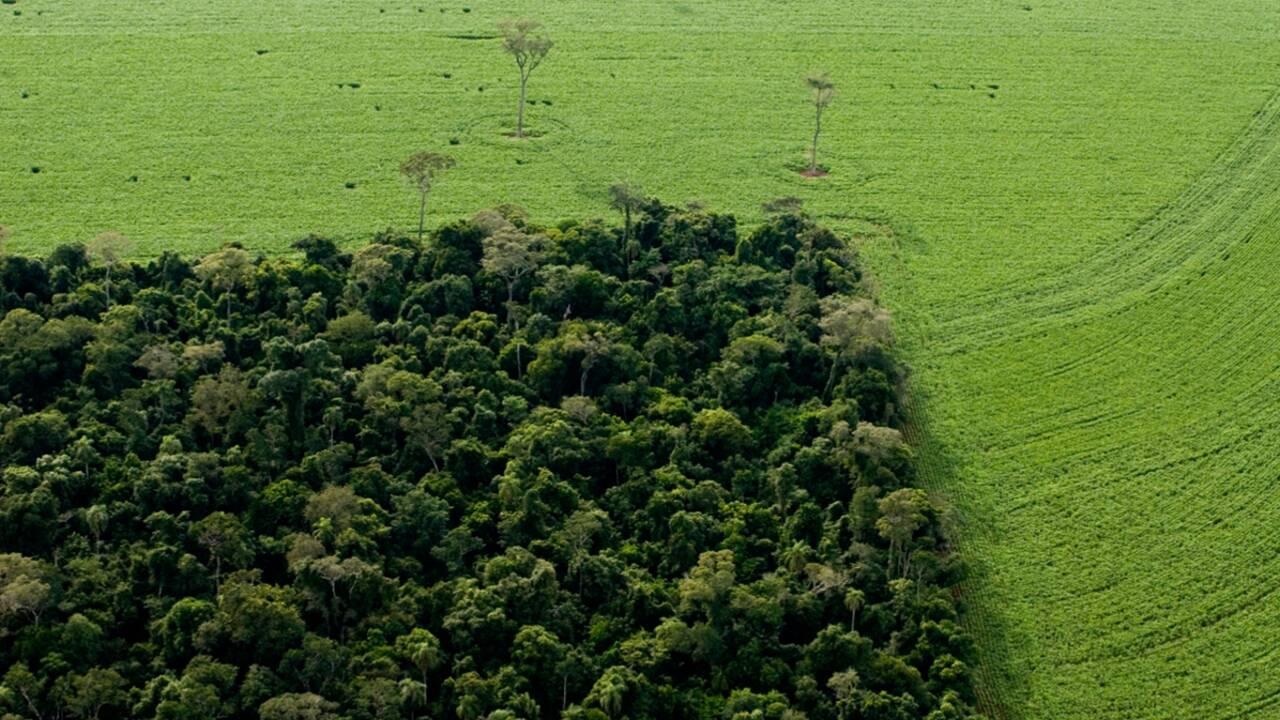 Amazonie : la déforestation s'accélère