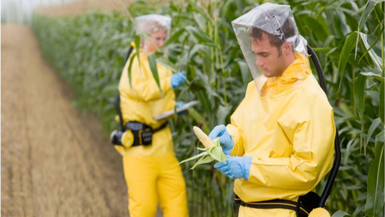 OGM : tout savoir sur les OGM