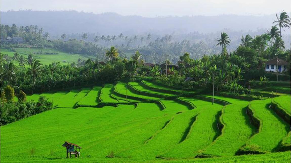 Voyage à Bali