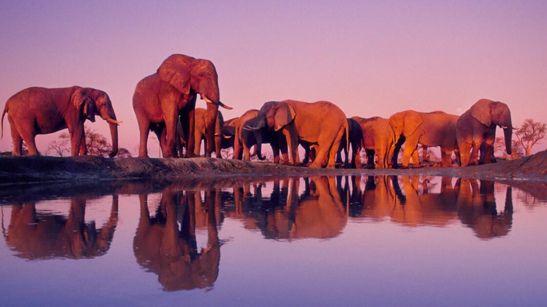 Voyage au Botswana