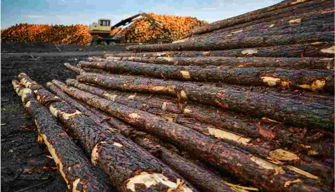 Environnement : le développement économique doit-il passer avant ?