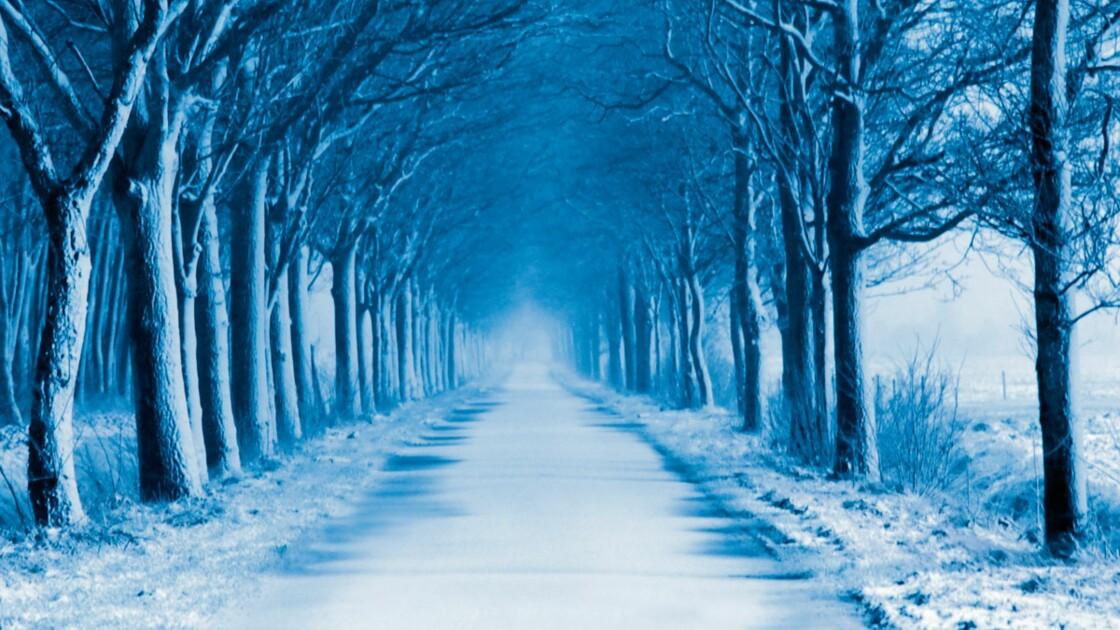 Sécurité routière : faut-il abattre les arbres le long des routes ?