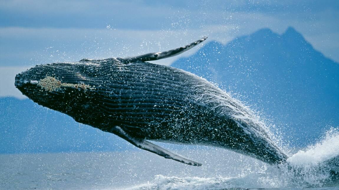Approuvez-vous l'intensification de la pêche à la baleine  en Europe ?