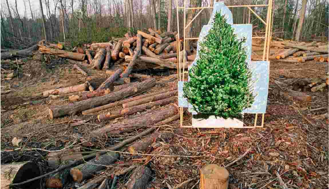 Environnement : soutenez-vous les opérations coup-de-poing des militants écologistes ?