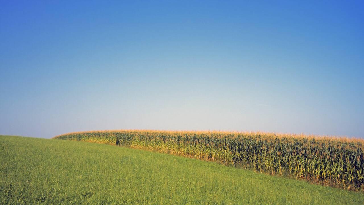 L'UE doit-elle renoncer à la culture du maïs OGM par précaution ?