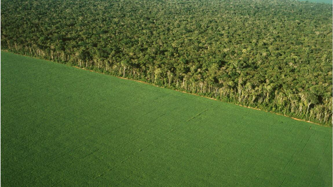 Êtes-vous tenté de parrainer une forêt tropicale pour la préserver ?