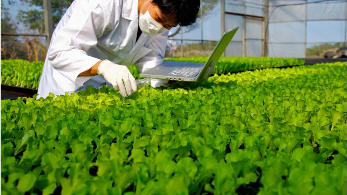 Les OGM sont-ils une solution contre le recours aux pesticides ?