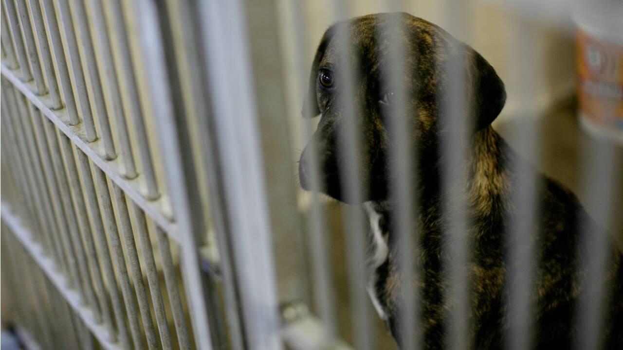 La loi doit-elle accorder des droits aux animaux ?