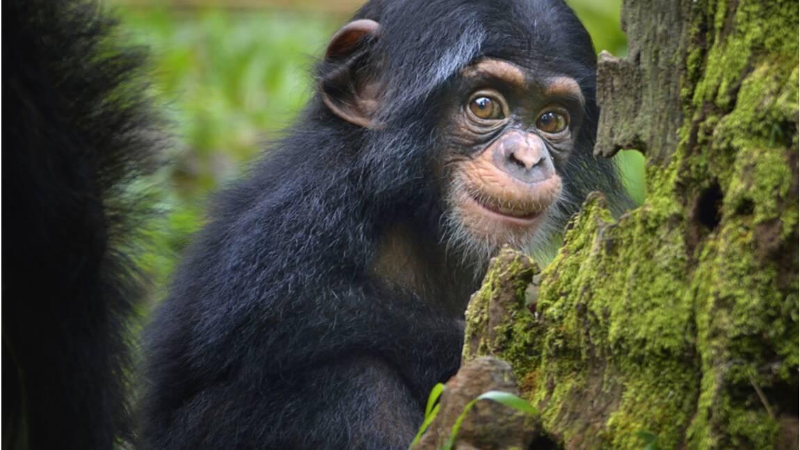 Faut-il accorder aux animaux un statut juridique spécifique ?