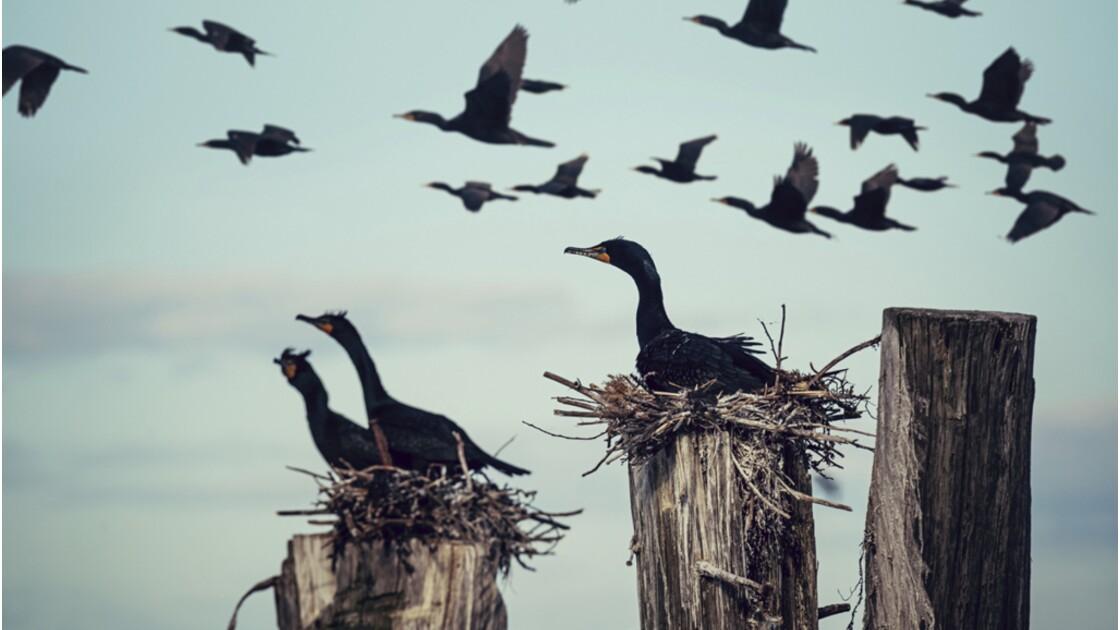 Biodiversité : est-il légitime de réguler certaines espèces pour en protéger d'autres ?
