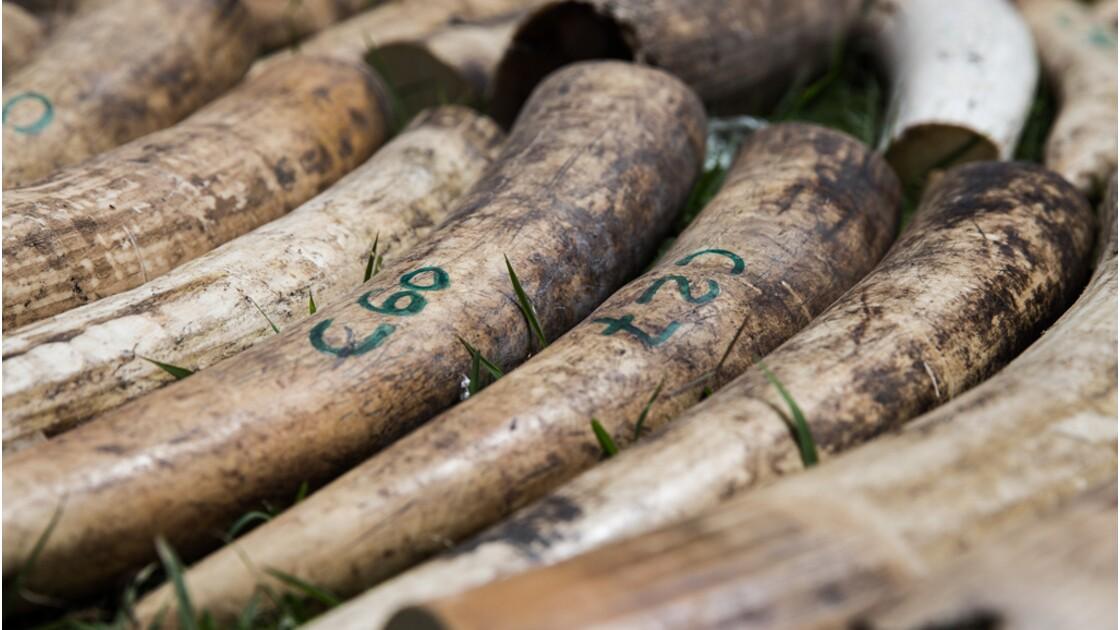Faut-il durcir les sanctions contre les crimes environnementaux ?