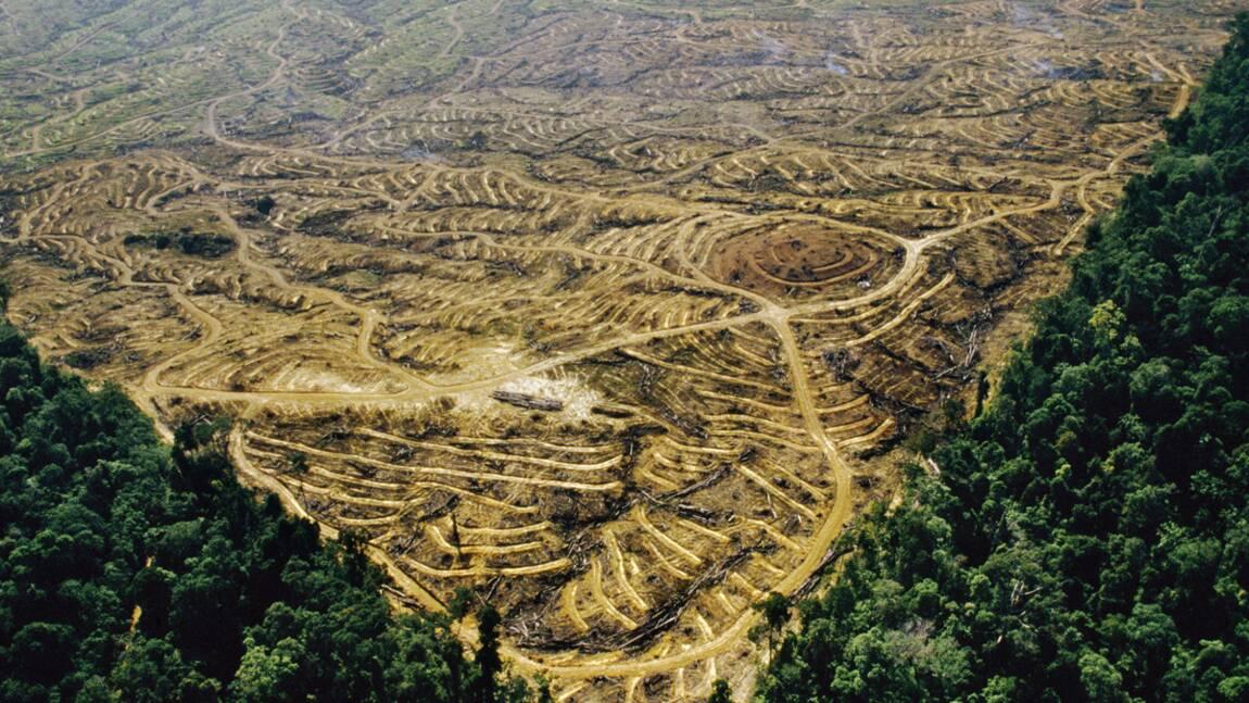 Produire des biocarburants au détriment des écosystèmes : pour ou contre ?