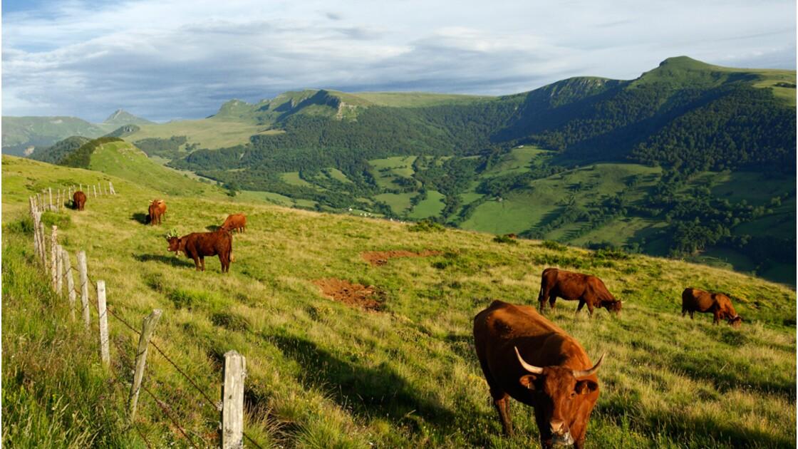 Êtes-vous prêt à consommer moins de viande rouge pour lutter contre le changement climatique ?