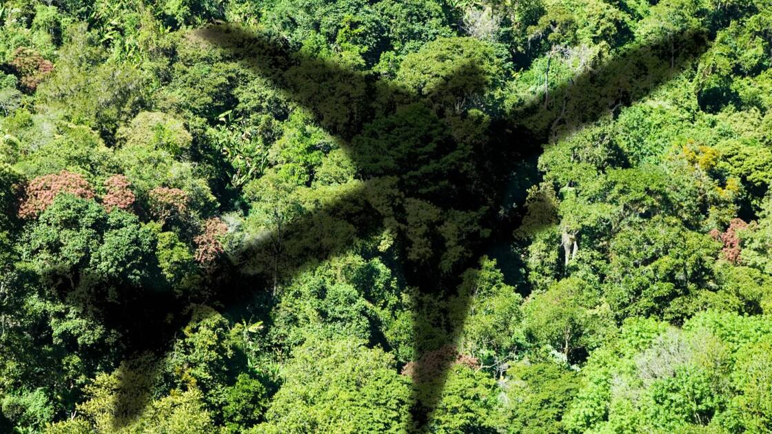 Émissions de CO2 : êtes-vous prêt à ne plus prendre l'avion ?