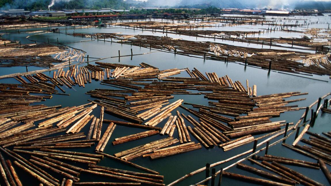 Commerce de bois illégal : faut-il certifier l'origine des bois tropicaux ?