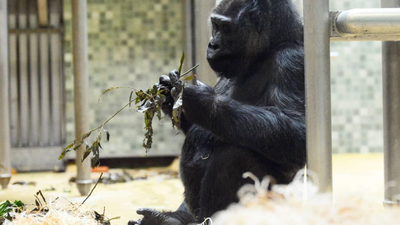Faut-il boycotter les zoos ?