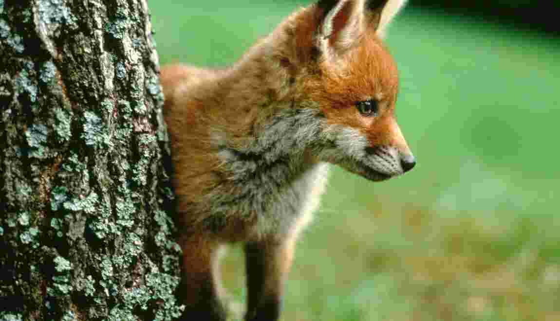 Faut-il autoriser la possession d'animaux sauvages ?
