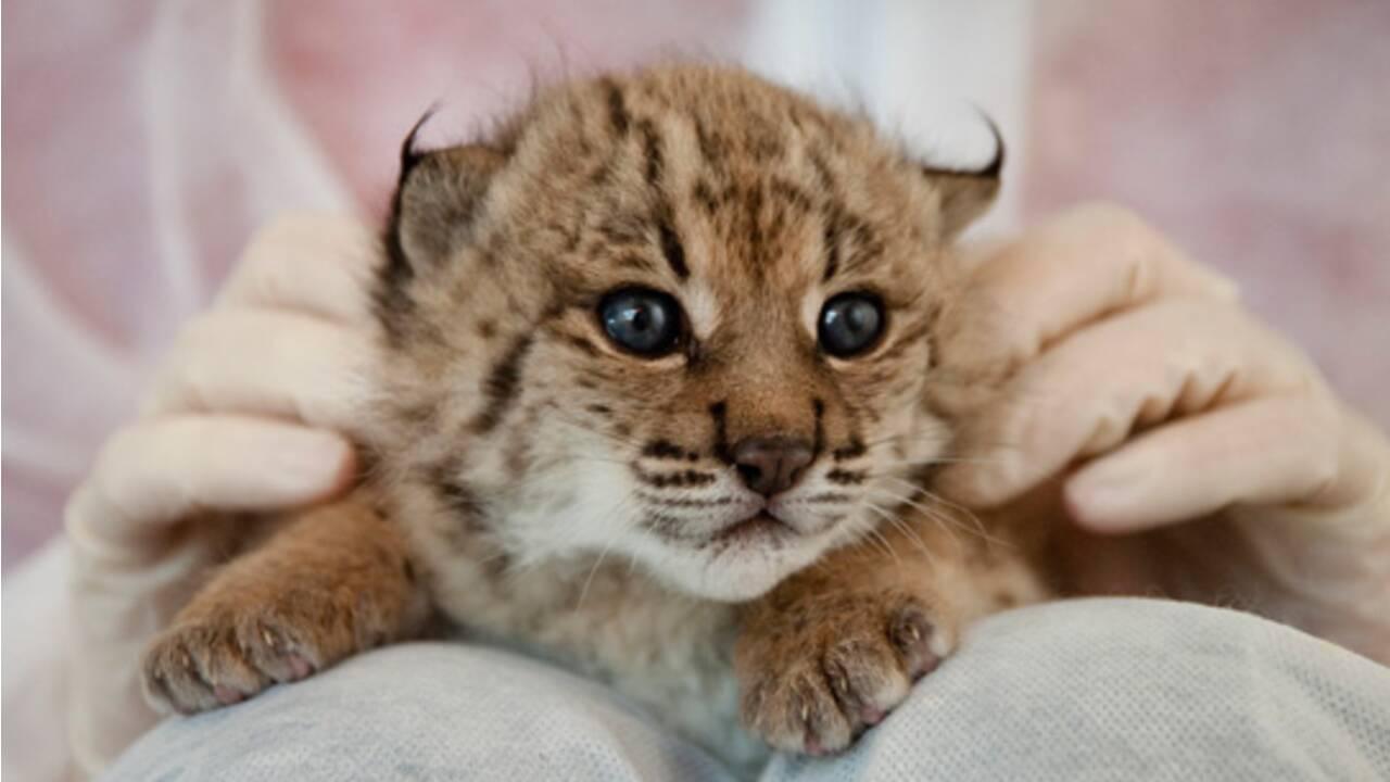 Vous sentez-vous concerné par l'extinction d'espèces animales ?