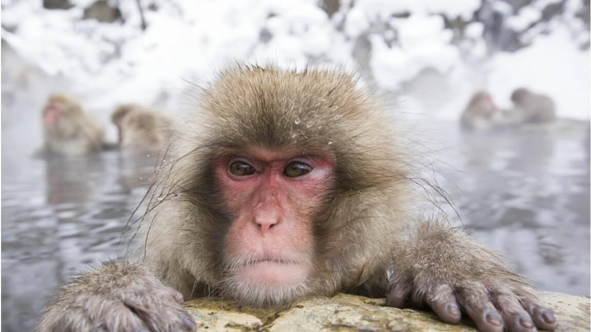 Faut-il autoriser les expériences scientifiques sur certains animaux ?