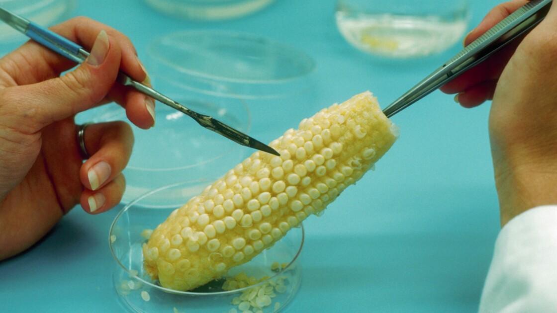 Les OGM sont-ils pour vous un progrès ou un danger ?