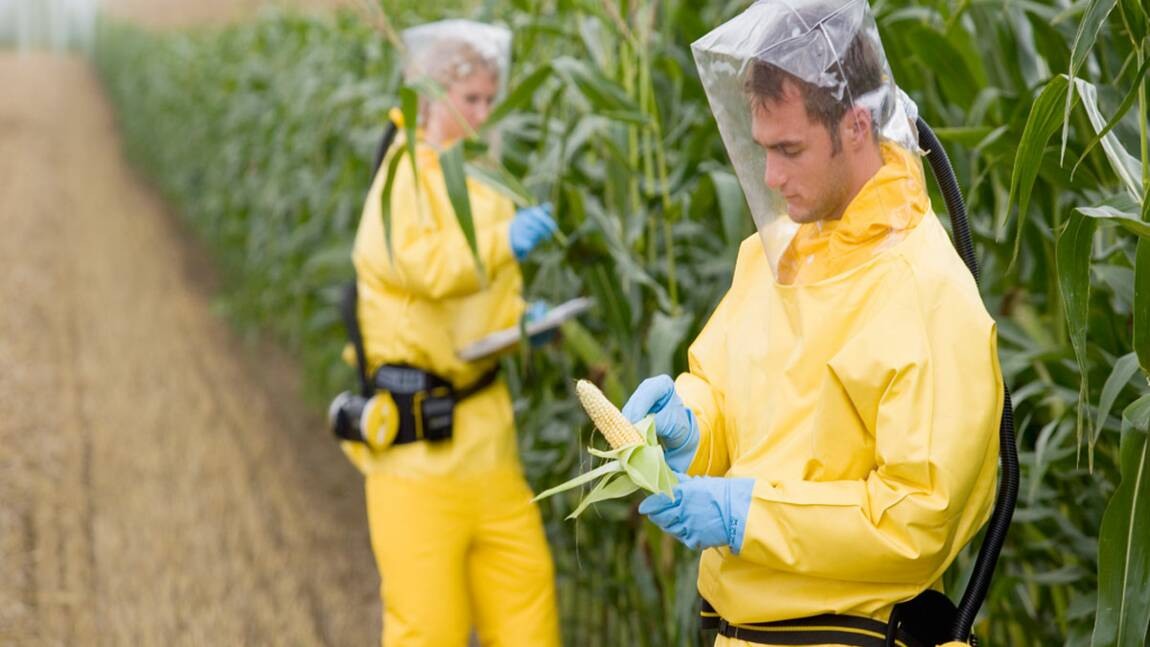 OGM : craignez-vous pour votre santé ?